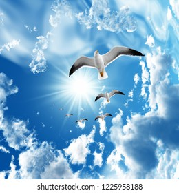 Seagulls descending from the sky