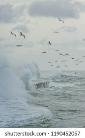 Seagulls are drifting in a storm landscape