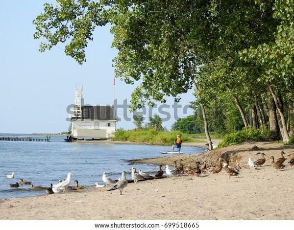 Seagulls and Ducks on the shores of Lake Ontario - Cherry Beach - Toronto