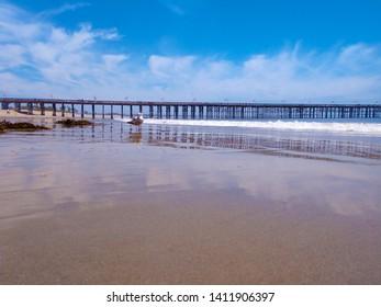 Seagulls enjoy an empty sandy beach in Ventura, California near the Ventura pier