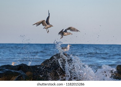 Seagulls with fast action freeze frame as they try to avoid the splash of a wave along the Jersey shore.