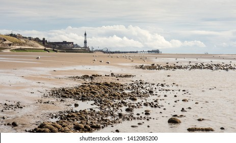 Seagulls feed at the water's edge on Blackpool Beach, with the iconic Blackpool Tower and North Pier in the distance.