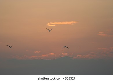 Sea-gulls flight on sunset
