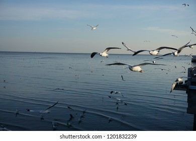Seagulls fling in the sea