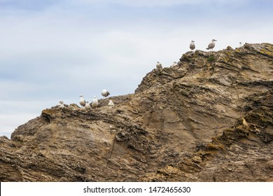 Seagulls flock on the shale rock