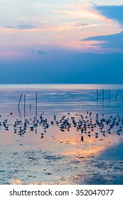 Seagulls flock at seashore while come to sunset, Colorful lighting and reflection on ripple.