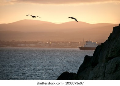 Seagulls fly over the cliffs at sunset background . Dublin .