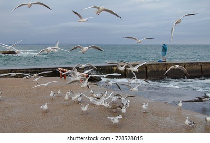 Seagulls fly over the sea