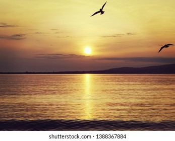 Seagulls fly over the sea at sunset