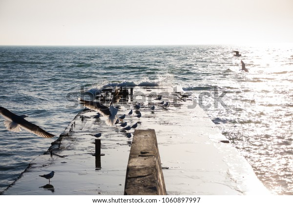 Seagulls fly over the waves. Dawn on the beach. The sunny photo in the morning on the pier.