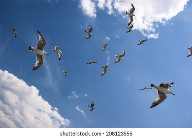 Seagulls are flyijng on sky