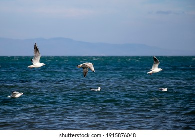 Seagulls flying above the sea in windy weather.