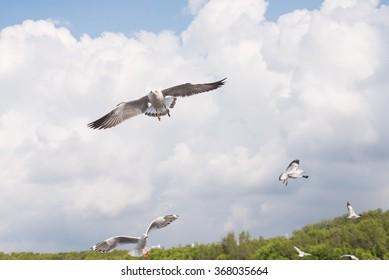 Seagulls flying in blue sky at Bangpu, Thailand