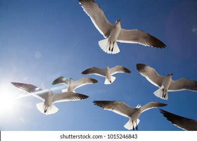 Seagulls flying in blue sky in Mexico.  Sun rays and glare