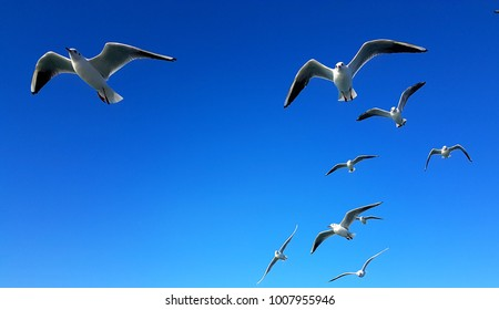 Seagulls flying in blue sky over the Marmara sea istanbul Turkey