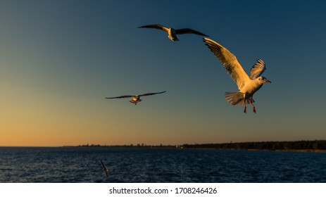 Seagulls flying close over head at Jurata pier, Jastarnia, Poland - Shutterstock ID 1708246426