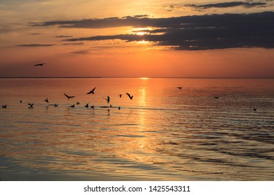 Seagulls flying and floating on the shore of baltic sea at sunset , Latvia, Jurmala
