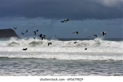 seagulls flying on a beachcalm, serenity, harmony, fullness, well-being, nature, natural, contemplate, meditate, breathe, grow, happiness, tranquility, fulfillment, integration,beauty,