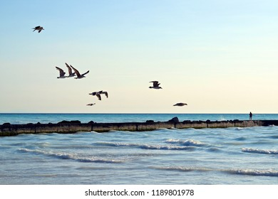 seagulls flying on the Livorno coast in Spiagge Bianche in the municipality of Rosignano Solvay in Tuscany Italy