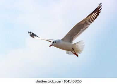 Seagulls flying on sky.