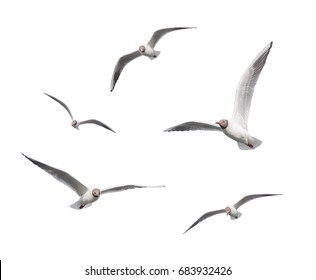 Seagulls flying on a white background