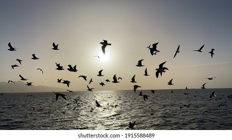 seagulls flying over aegean sea in Izmir