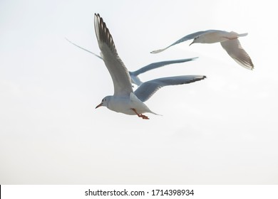 Seagulls flying over the city. wings of  birds.