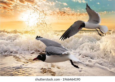 Seagulls flying over a foaming ocean at sunrise, in Galveston, Texas.