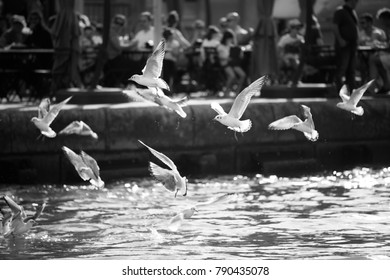 Seagulls flying over the harbor waters. Tourism destination.