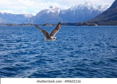 seagulls flying over Lake Nahuel Huapi, Patagonia, Argenina