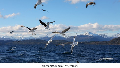 seagulls flying over the lake in southern Argentina, Bariloche