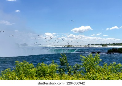 Seagulls flying over the Niagara Horseshoe Falls