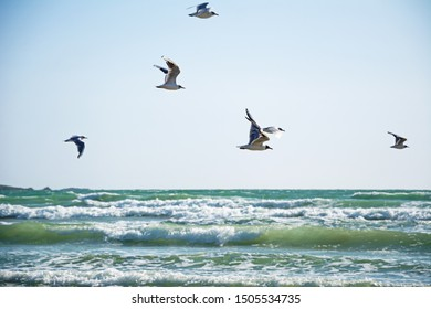 Seagulls flying over the ocean waves