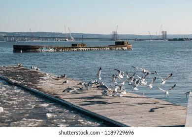 Lot of seagulls flying over river Hudson on winter.