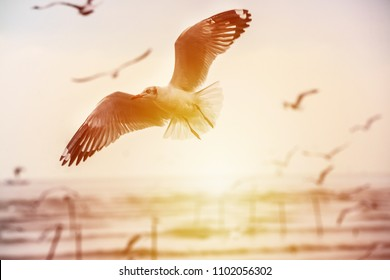 Seagulls are flying over the sea in the orange sunset sky