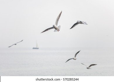 Seagulls flying over the sea with ship on the background