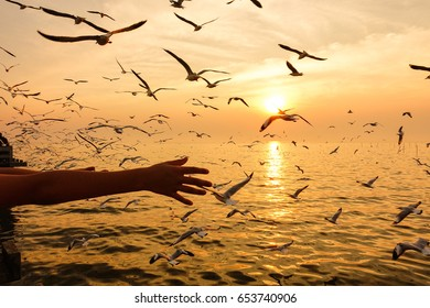 Seagulls are flying over the sea with woman's hand and sunset.
