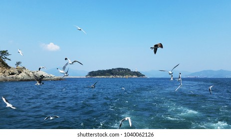 Seagulls flying over sea at Yeosu city, Korea