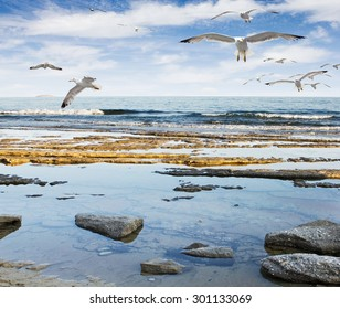 Seagulls flying at sea rocky beach  - Greece, Thassos, Limenaria.
