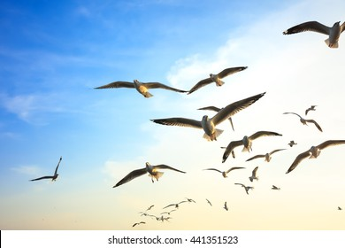 Seagulls flying at sunset.