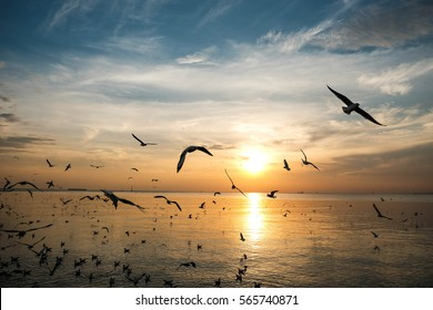 Seagulls are flying in the yellow sunset sky with dense clouds ,Bangpu Recreation Center, Thailand
