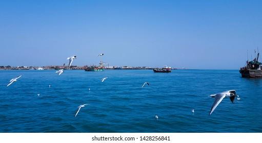 seagulls flyong above blue sea at dwarka gujrat india