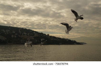 Seagulls following the ferry from Princes Islands to Istanbul, Turkey