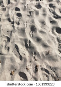 seagulls footprints on the sand