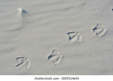 Seagulls footprints on sand beach by Baltic Sea