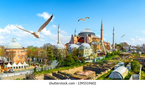 Seagulls and Hagia Sophia at day in Istanbul, Turkey