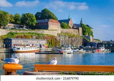 Seagulls in harbor in front of Akershus fortress, Oslo, Norway