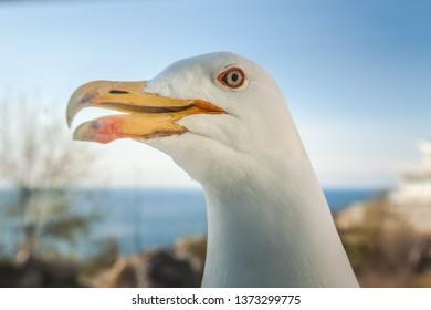 Seagull's head on the sky background. Crimea, Yalta