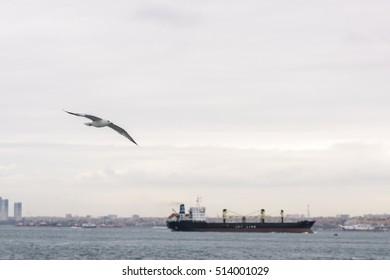seagulls / Istanbul / sea view / ship