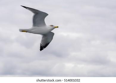 seagulls / Istanbul / sky